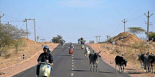 code de la route Inde, priorité aux vaches