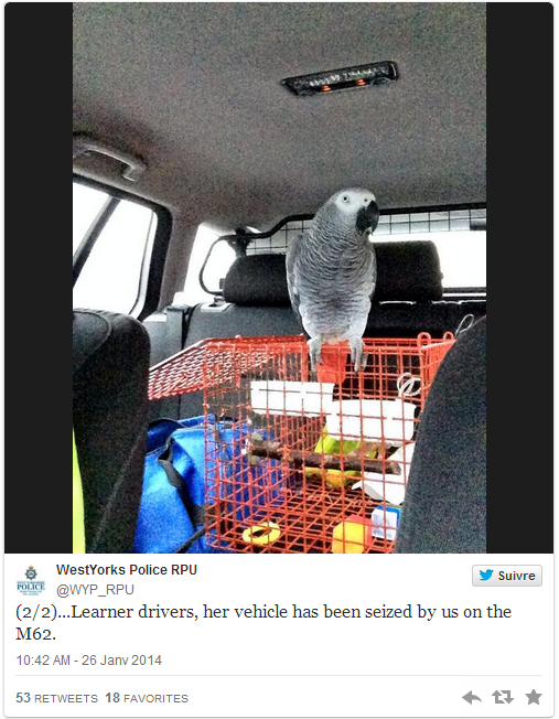 perroquet, superviseur, code de la route